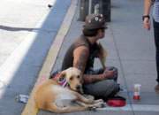 Panhandler with a pet on the street