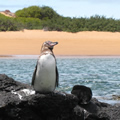 penguin on rocks